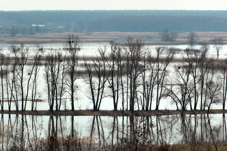 Flooded trees during high water in spring time, Ukraine Stock Photo