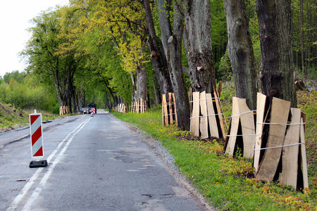 Trunks of roadside trees protected by wooden planks during a road construction 스톡 콘텐츠
