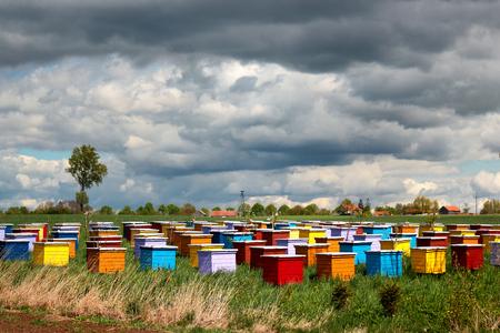 Coloridas colmenas de abejas en un campo