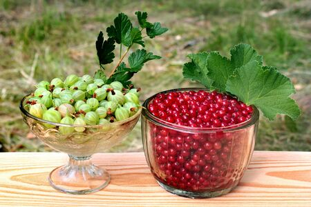 Freshly gathered redcurrant berries (Ribes Rubrum) and gooseberries (Ribes uva-crispa) in glass bowls