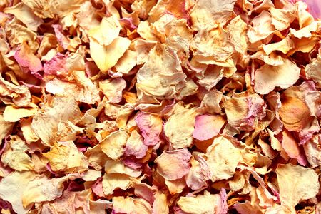 Dried rose petals as background