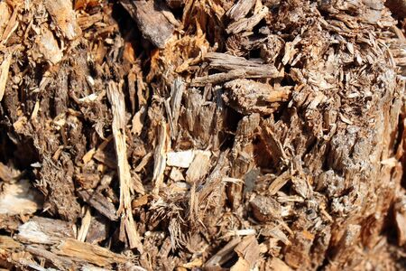 Closeup structure of old rotten and decayed wood