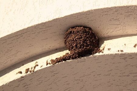 Empty swallow nest Banco de Imagens