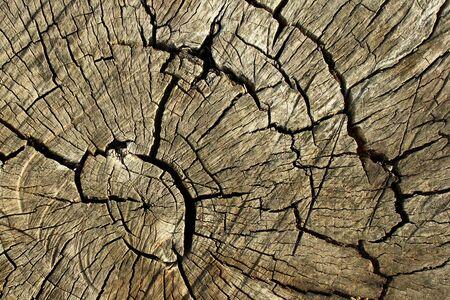Dead tree trunk. Cracked stump background.