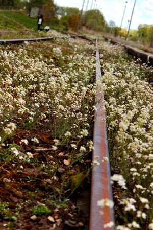 Abandoned railway station. Rusty rails overgrown with wild flowers and weeds. Фото со стока