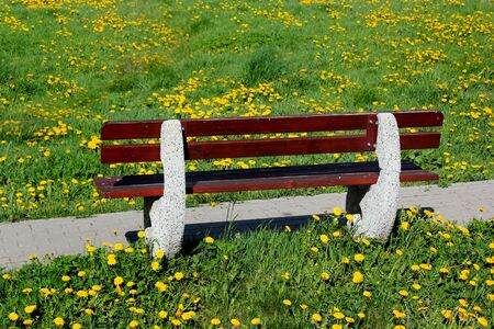 Wooden bench on a green lawn with yellow dandelion flowers