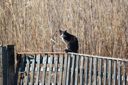 Cat on a wooden fence, rural scene