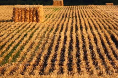Bale of straw and stubbles on a harvested wheat field Zdjęcie Seryjne
