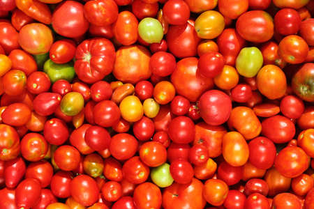 Home grown tomatoes as vegetable background Фото со стока