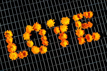 Word Love on a metal mesh fence. Arrangement of pot marigold flowers.