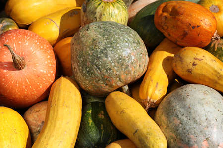 Zucchini squash crop, abundant agricultural produce concept background
