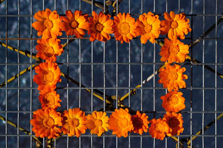 Pot marigold flowers on metal wire mesh fence Фото со стока