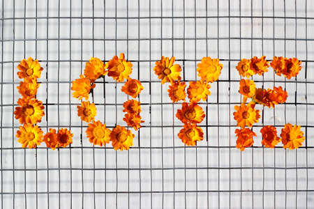 Arrangement of pot marigold flowers, word love on metal mesh fence.