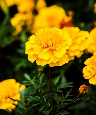 Flower close-up Banco de Imagens - 80147284