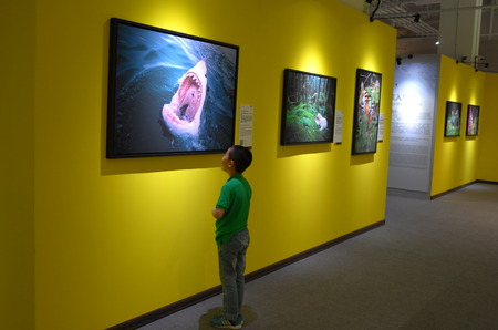 fish exhibition: Photography exhibition Editorial