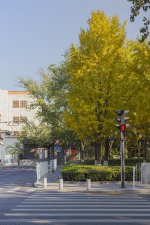 autumn road: Autumn Road scenery