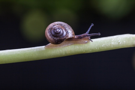 natural force: Snail on branches
