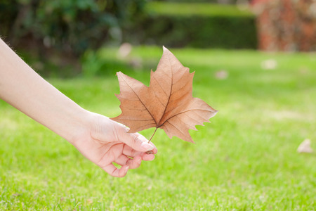 natural force: Leaves on the fingertips
