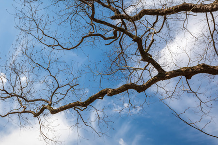 low angles: Trees under blue sky