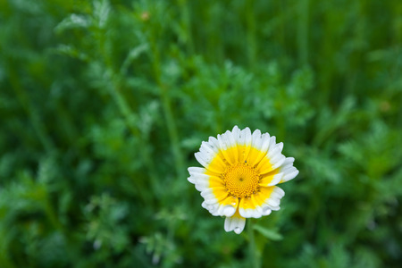 natural force: Daisy