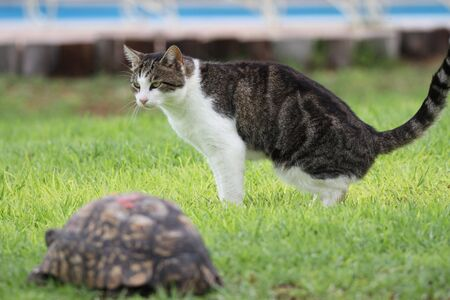 A cat and a turtle Tortoise and cat running? The rabbit lost to the turtle, is it now the cat's turn?