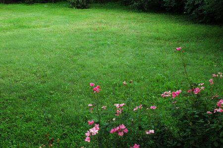 grassplot: Grassplot with flower                           Stock Photo