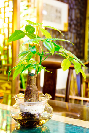 Indoor plants, flower pots and the environment