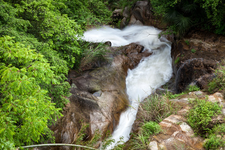 rivulet: Rivulet and trees
