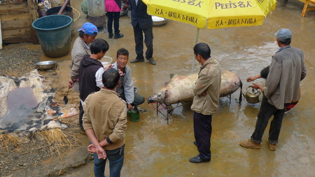 wedding feast: LIJIANG, CHINA - SEPTEMBER 19: Mosuo Minority People butcher pig and remove the pig hair for a wedding feast, September 19, 2013, Yongning, Linlang, Lijiang, Yunnan,China