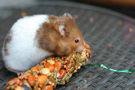 munch: Funny hamster eating food