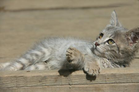 sunbath: Mooie kat in zonnebaden