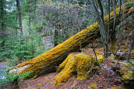 mossy: Mossy trees Stock Photo