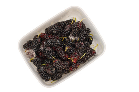 spoilage: Close up of moldy mulberries isolated on white background