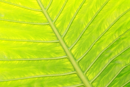 closeup of plant leaf texture in the wild Stock Photo - 18575940