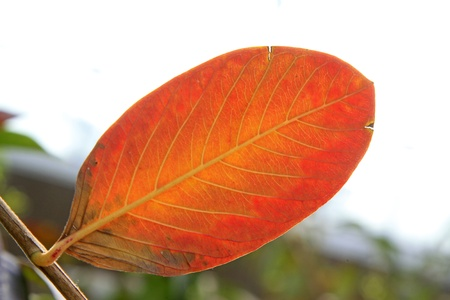 red leaves of plants in the wild Stock Photo - 18574718
