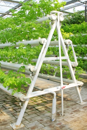 soilless cultivation: Stereo planting celery in the Leting modern agricultural garden