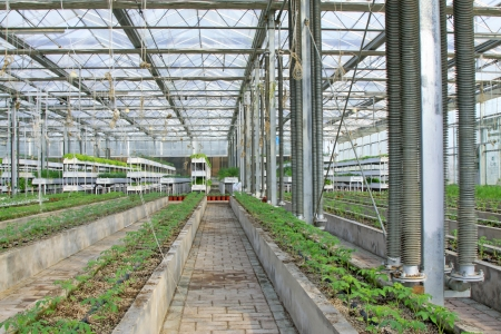 soilless cultivation: Soilless cultivation green vegetables in the Leting modern agricultural garden Stock Photo