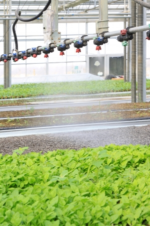 Smart spraying equipment in the Leting modern agricultural garden