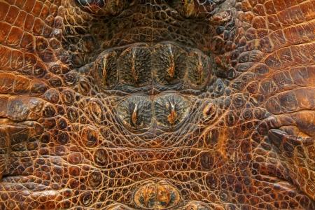 closeup of crocodile skin Stock Photo