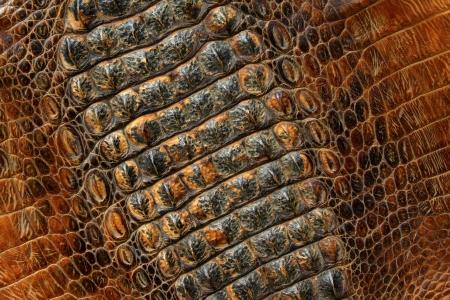 closeup of photo, crocodile skin Stock Photo - 18989943