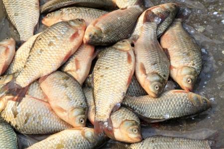 piles of crucian carp, closeup of photo Stock Photo - 18989780