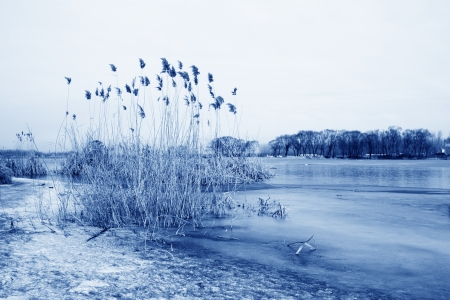 waterfront plant landscape in winter, north china