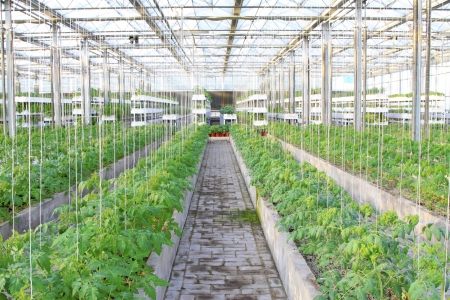 soilless cultivation: Soilless cultivation of green vegetables in a botanical garden Editorial
