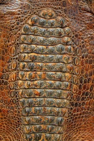 closeup of photo, crocodile skin
