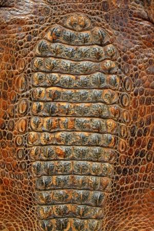 cold blooded: closeup of photo, crocodile skin