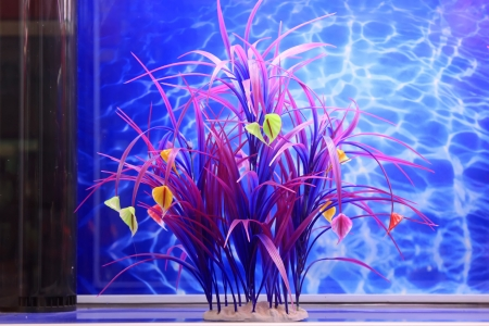 fresh water plant in an aquarium in a market Stock Photo - 19149869