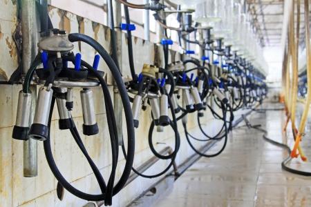 Mechanized milking equipment in a milking workshop Editorial