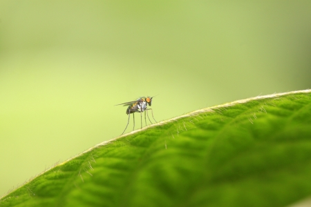gadfly: gadfly on a green leaf in the wild Stock Photo