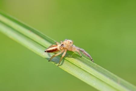 compound eye: a kind of animal named spider