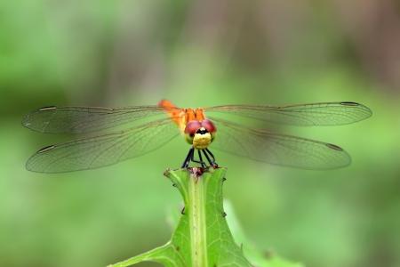 agachado: lib�lula amarilla se qued� en las plantas en el mundo natural